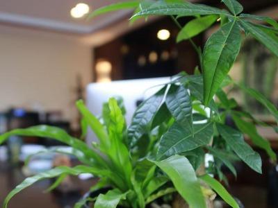 青岛北区绿植公司电话-青岛北区绿植公司哪家好-北区绿植公司价格